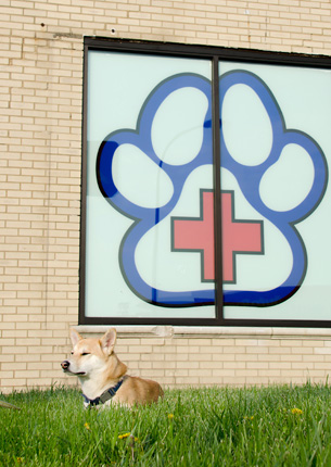 Animal Hospital on Route 66